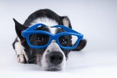 狗滑稽的特写镜头画象  免版税库存照片