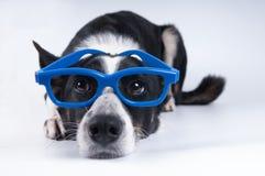 狗滑稽的特写镜头画象  免版税库存图片