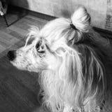 狗 黑色&白色 敌意 免版税图库摄影