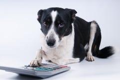 狗说谎的画象与计算器的 免版税库存图片