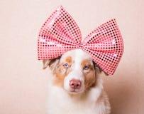 狗画象与一把巨大的桃红色弓的在她的头 免版税库存图片