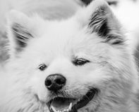 狗画象 免版税库存图片