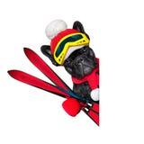 狗滑雪冬天 库存照片