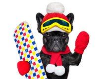 狗滑雪冬天 库存图片