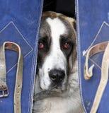 狗 库存图片