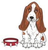狗adn红色衣领 向量例证