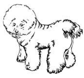 狗Bichon Frise传染媒介illustra装饰常设画象  库存例证