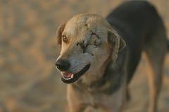 狗HD迷离风景冬天注视充分的BLURR 库存照片