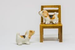 狗Shih在长木凳的慈济Cerimic在公园 免版税库存照片