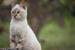 狡猾似猫 免版税库存图片