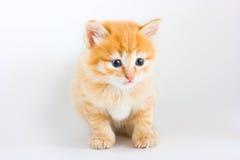 狡猾的小猫坐的白色 免版税库存照片