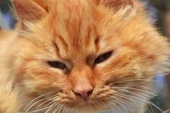 狡猾的红色猫特写镜头 免版税库存照片