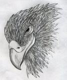 狡猾的老鹰 库存照片
