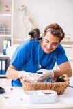 狩医医生审查的小猫在动物医院中 免版税库存图片
