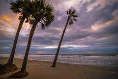 狩猎海岛矮棕榈条树 免版税库存图片