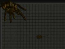 狩猎蜘蛛 免版税库存图片