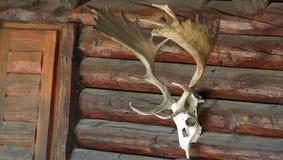 狩猎 免版税库存图片