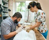狩医和四叶花饰牙齿保护 免版税库存图片