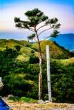 独奏树顶面俯视的山 库存照片