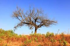 独奏树 图库摄影