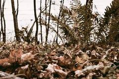独奏的秋天 免版税图库摄影