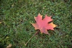 独奏秋天的叶子 免版税库存图片