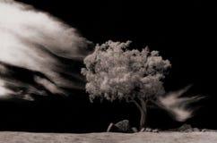 独奏结构树 免版税图库摄影
