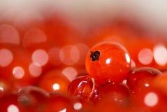 独奏2个无核小葡萄干的红色 免版税图库摄影