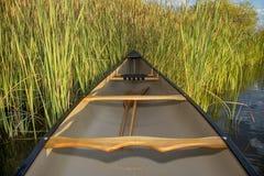 独木舟和香蒲 库存图片