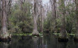独木舟皮船足迹, Okefenokee沼泽全国野生生物保护区 库存照片