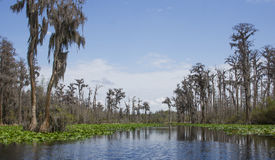 独木舟皮船足迹Minnies湖, Okefenokee沼泽全国野生生物保护区 库存照片
