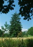 独来独往的人夏天结构树 库存照片