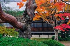 独特地形状的树和秋叶在日本庭院里 免版税库存照片