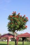 独特的俏丽的树在一个热的晴天 库存照片