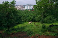 独特的印度城市浦那 免版税库存图片
