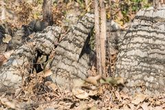 独特的岩层在中央印度 图库摄影