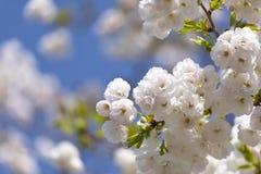 独特的柔软春天绽放 免版税库存图片