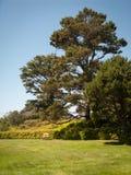 独特的树和孤立长凳 库存图片