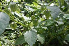 独特的植物 免版税库存照片