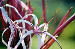 独特的热带花 免版税库存图片
