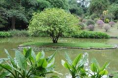 独特的皇家植物园在Peradeniya被考虑作为一个最好在亚洲 免版税图库摄影