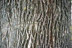 独特的老木吠声纹理-背景 免版税库存图片