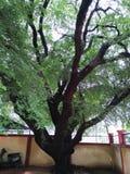 独特&美丽的植物&树在庭院里 库存图片