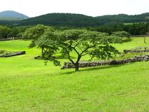独立传播的树 库存照片