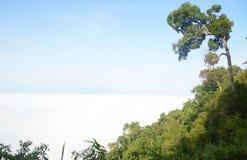 独立树有早晨薄雾背景 免版税库存照片