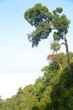 独立树有早晨薄雾背景 库存照片