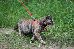 与猫的步行 免版税库存图片