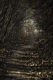 狭窄的树道路 免版税库存照片