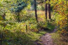 狭窄的沙子道路在秋天颜色的一个森林里 库存照片