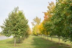 狭窄的路在有年轻秋天树的公园 在罗阿附近 库存照片
